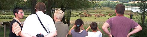 Balade au crepuscule parc animalier sainte croix entre strasbourg nancy et metz.